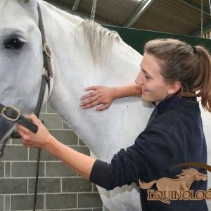 Equine Action Photos