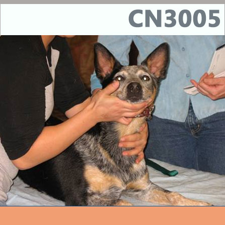 cn3005